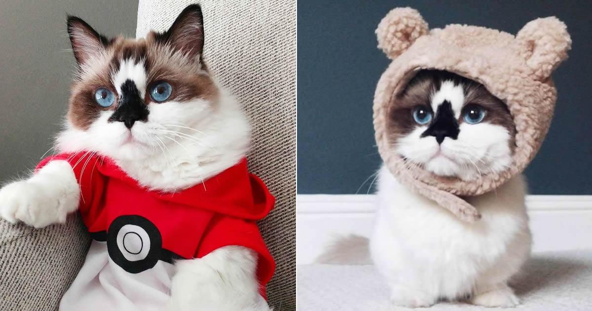 Munchkin Cat Gif Gag