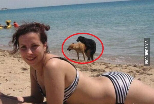 ANIMAL PHOTOBOMB : LVL MASTER