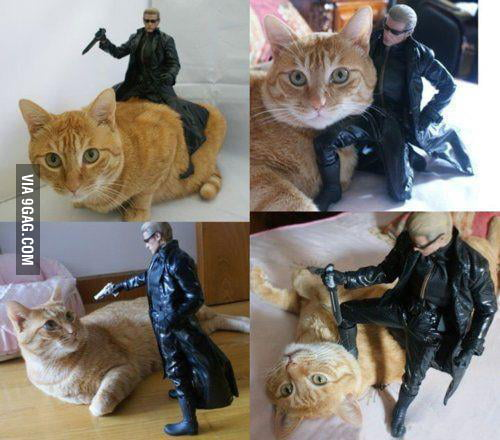 Just my cat with terminator