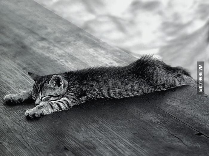 Cat Planking
