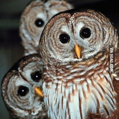 The look of my friends when I don't want to drink tonight