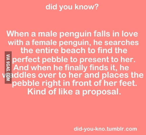 Penguin proposal