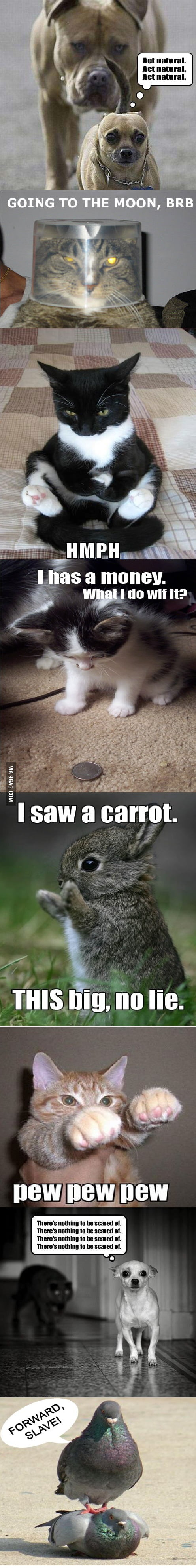 funny animal pictures   9gag