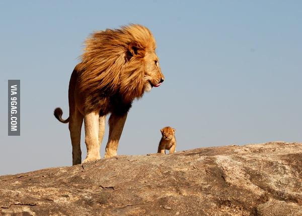 Mufasa And Simba IRL