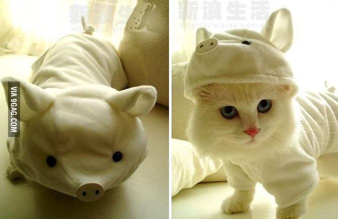 Disguised Pig (or cat?)