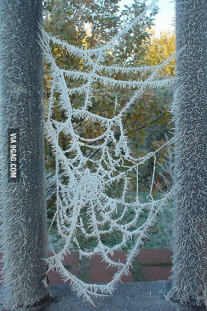 Just a frozen spider web