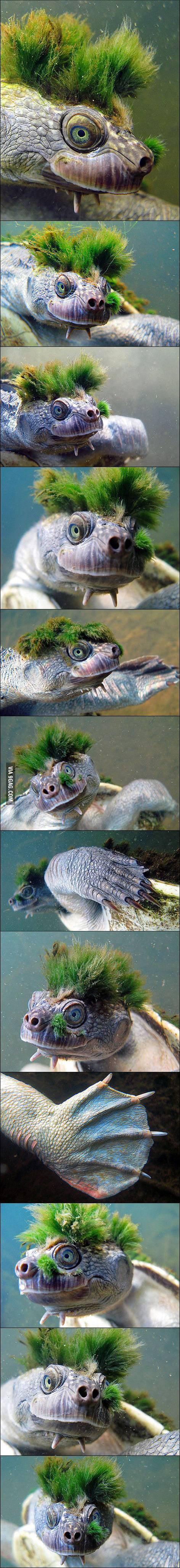 Moss Turtle