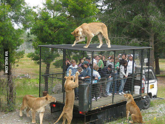 This is the real way we should watch wild animals...