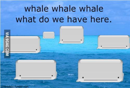 ... uhm, whales?