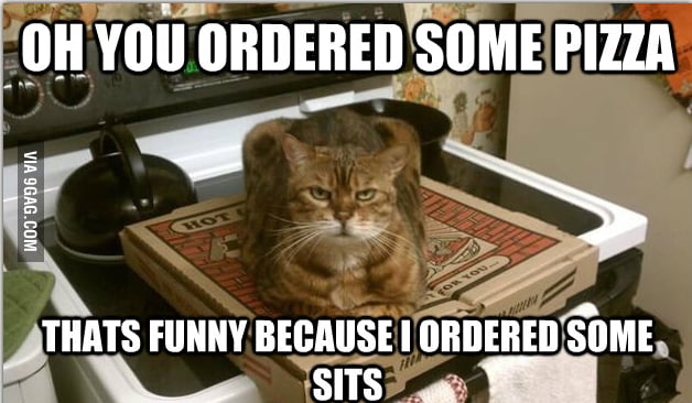 Sittin cat