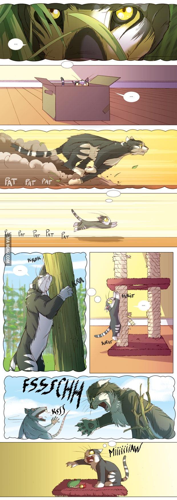 A Cat life !!!