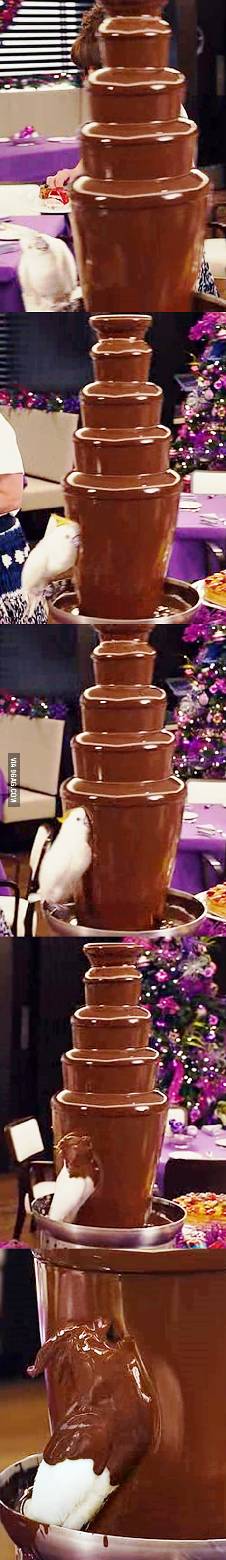 Chocolate addiction lvl : Parrot