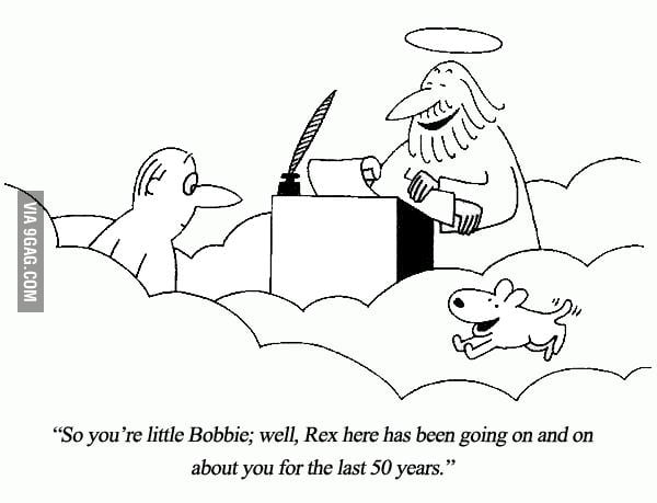 Dogs : also loyal after death