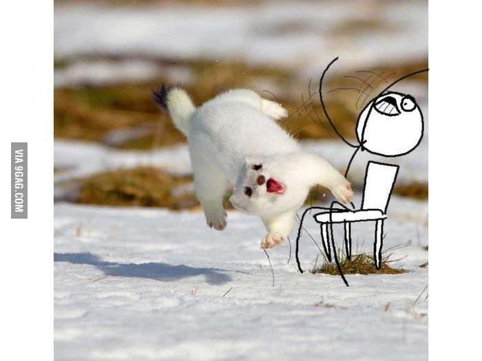 Ferret Flip