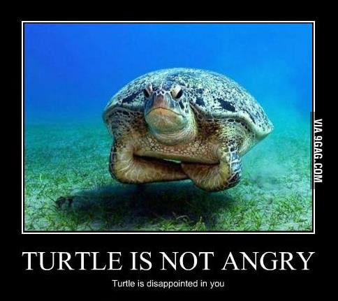 Disappointed Turtle Meme Disappointed Turtle