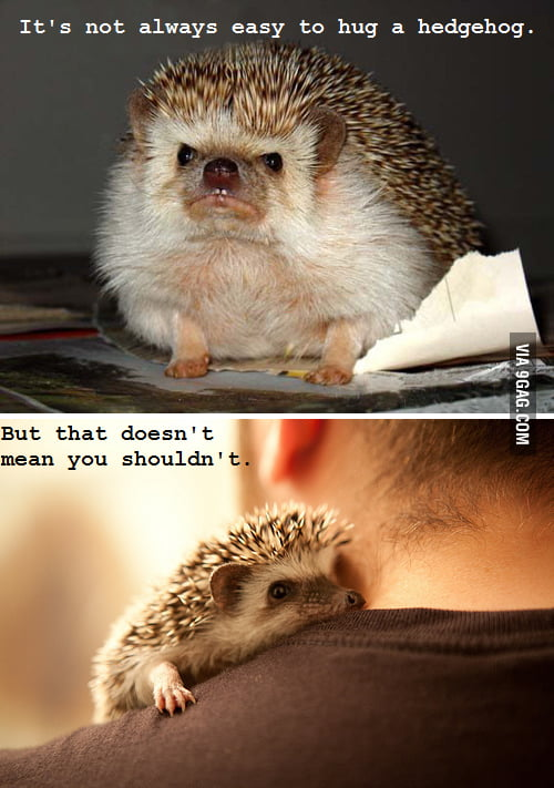 It's not always easy to hug a hedgehog