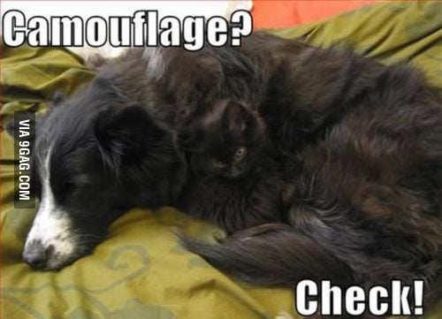 Camuflage...
