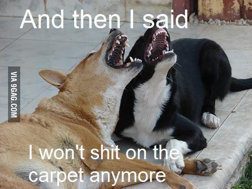 Scumbag dogs