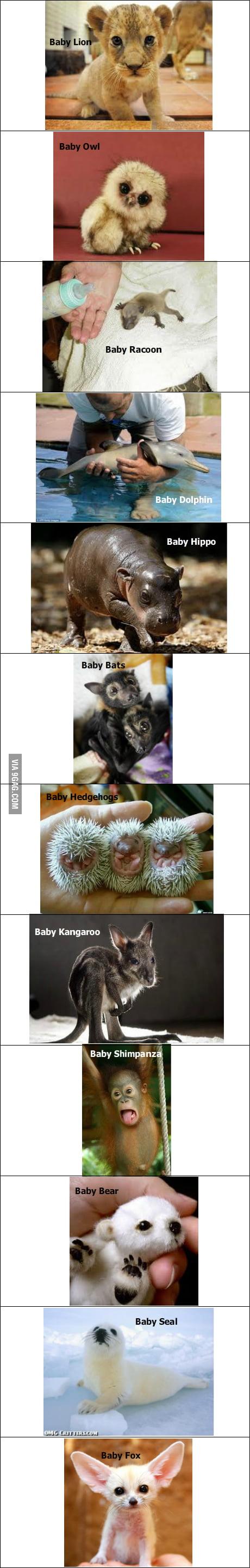 Baby Animals