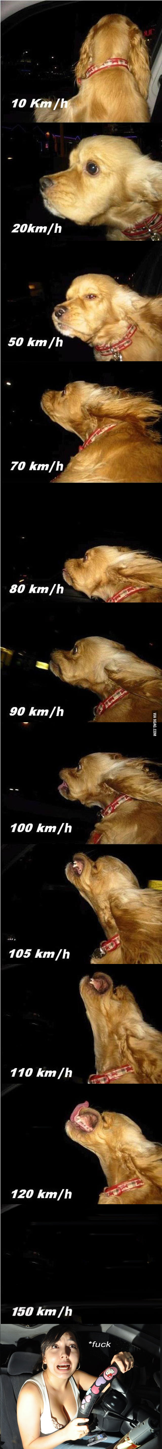 That's my dog at speed... wait... f*