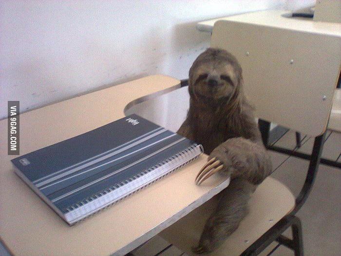 Even a sloth studies more than me...