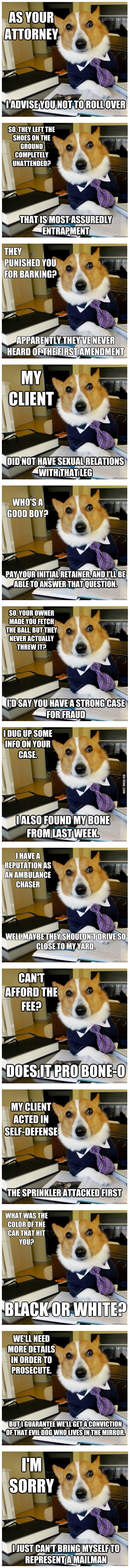The Best Of The Lawyer Dog Meme