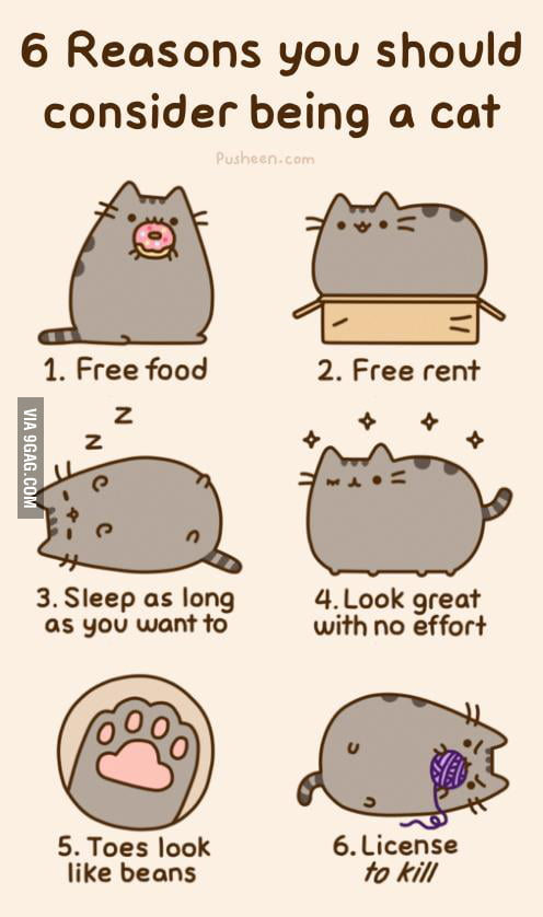 Why you wanna be a cat