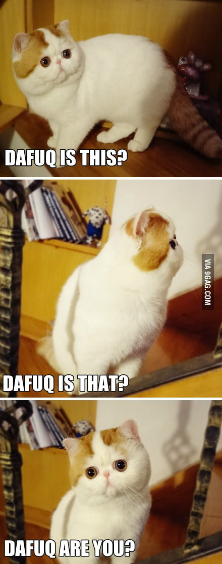 Confused cat is like...