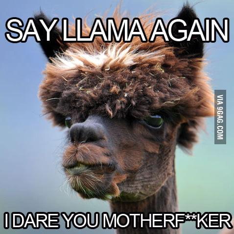 Alpaca hates being called llama