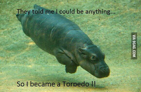 Baby hippopotamus strikes again !