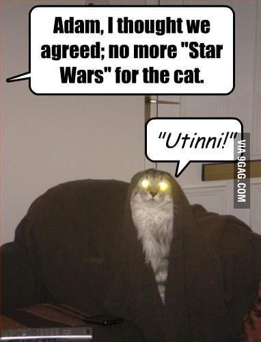 Starwars Cat