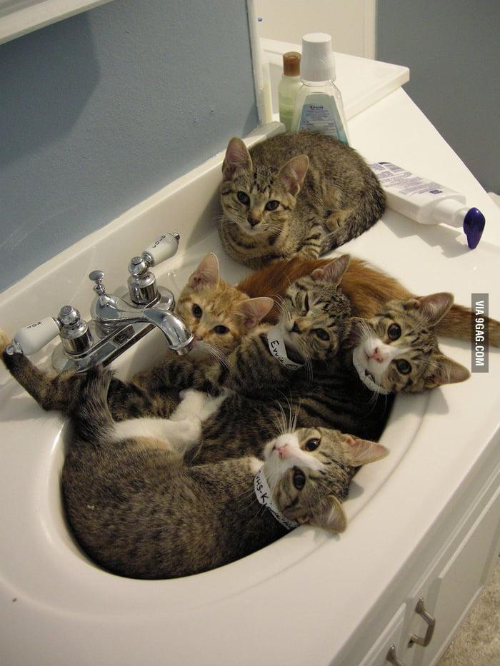 I heard you like cats.
