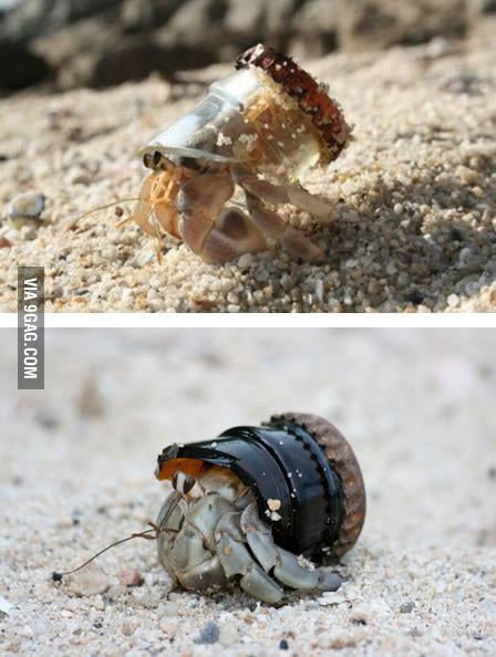New 2012 Summer Hermit Crabs Fashion