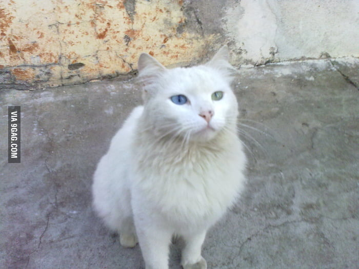 Just a blue-green eye cat I met on the way home
