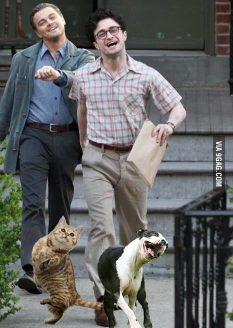 Just Leonardo Dicaprio, Daniel Radcliffe and their pets....