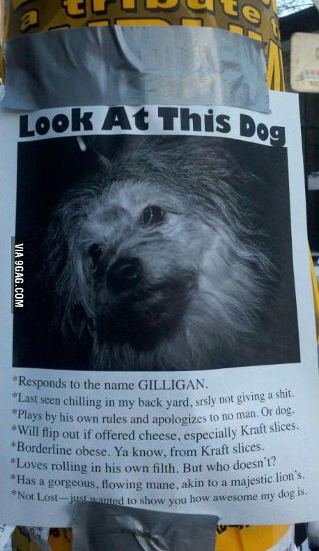 Look at this dog!