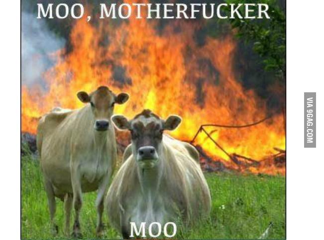 Moo! Moo!