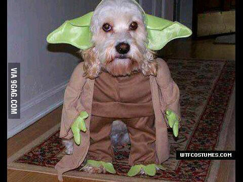 The Woof is strong with this one