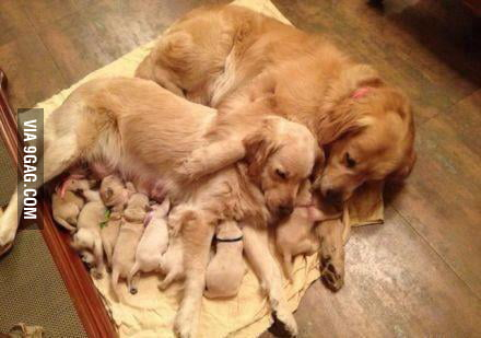 Just puppies with their mom and grandma