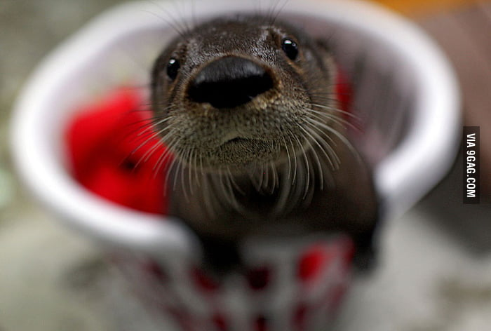 Otter post more pictures of him