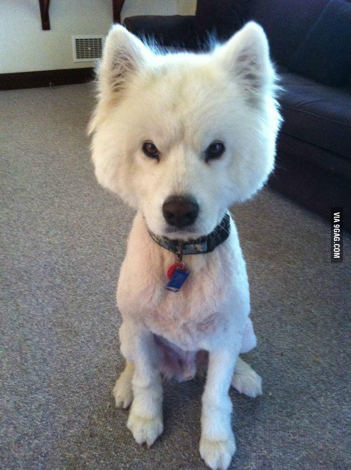 Girlfriend's dog wasn't happy coming back from the groomers