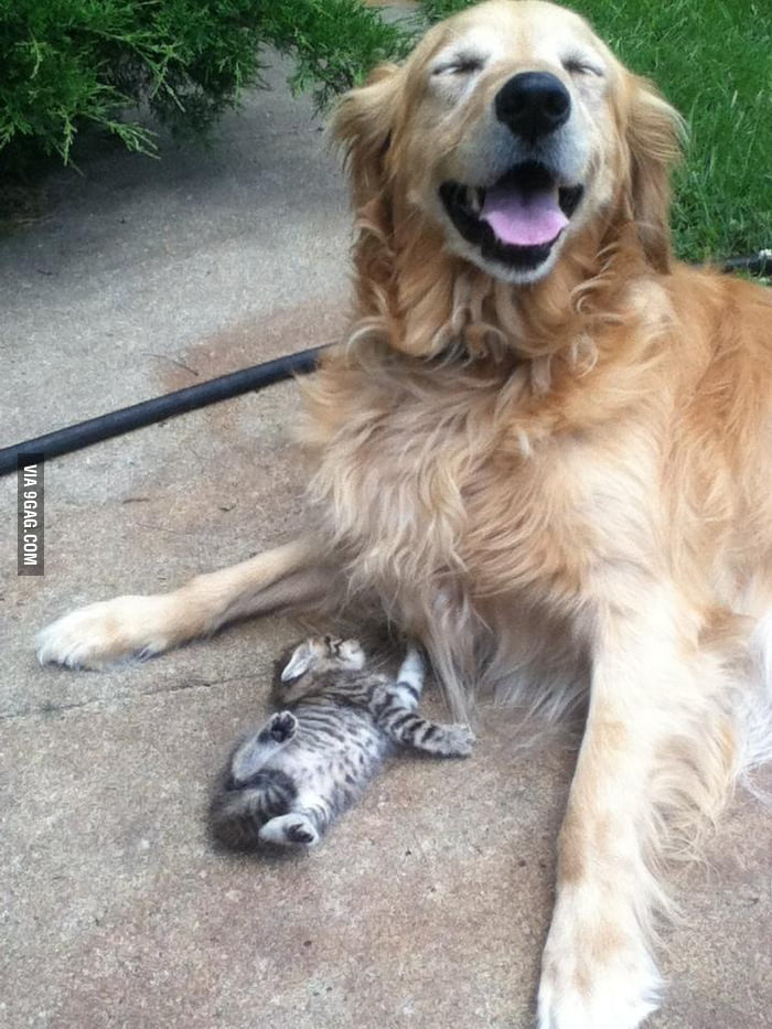 My golden and her new best friend