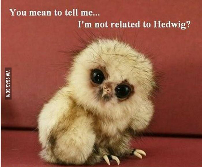 Disappointed owl..