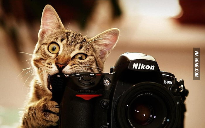 Only cats use Nikon.