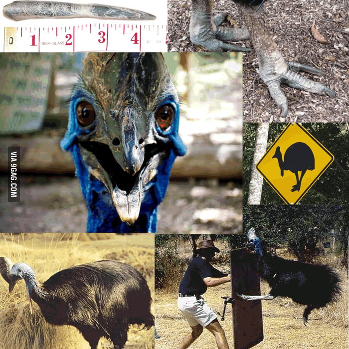 Cassowary - Creatures from the Nightmare Land