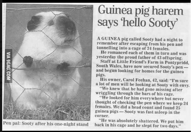 Sooty, you legend