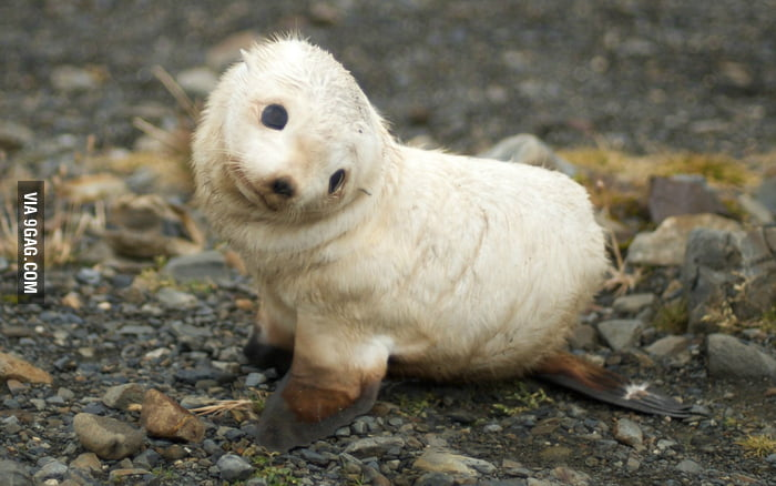 Just a baby Sea Lion