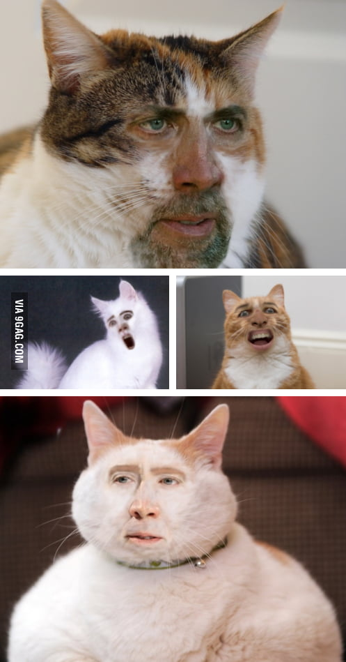 Cage Cat Face-Swap