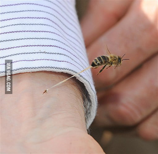 Just a Bee stinging someone