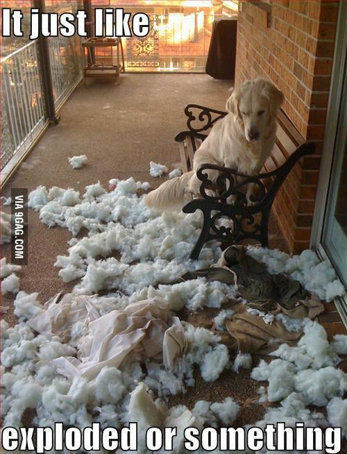 Oh Dog...